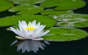 MIndfulness workshophoz lotus
